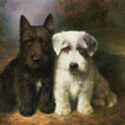 A Scottish And A Sealyham Terrier Art Print