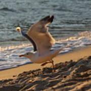A Seagull Starts His Flight Art Print