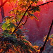 A Season's  Sunset Dusting Art Print