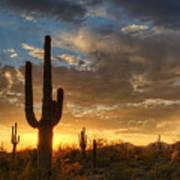 A Serene Sunset In The Sonoran Desert  Art Print
