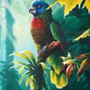 A Shady Spot - St. Lucia Parrot Art Print