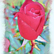 A Single Rose In October Art Print