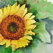 A Single Sunflower Art Print