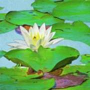 A Single Water Lily Blossom Art Print