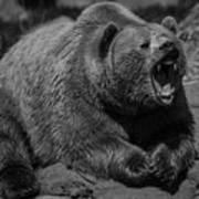 A Slightly Upset Grizzly Bear Art Print