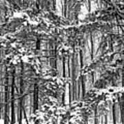 A Snowy Day Bw Art Print