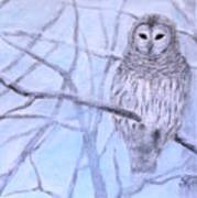 A Barred Owl Art Print