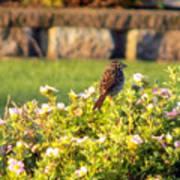 A Sparrow Surveys Art Print