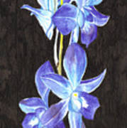 A Spray Of Orchids Art Print