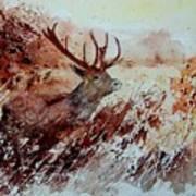 A Stag Art Print