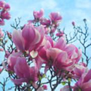 A Symphony Of Magnolia Flowers Art Print