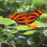 A Tiger Amongst The Petals Art Print