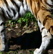 A Tigers Stride Art Print