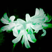 A Touch Of Green On The Lilies Art Print