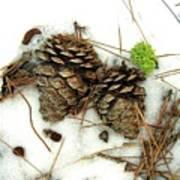 A Touch Of Moss Art Print