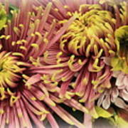 A Touch Of Yellow On Pink Mums Art Print