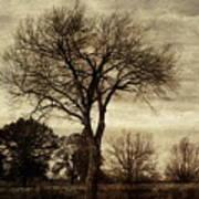 A Tree Along The Roadside Art Print