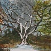 A Tree For All Seasons  Art Print