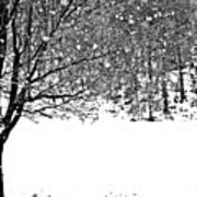A Tree In Snowy Winter Art Print