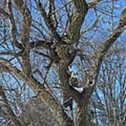 A Tree In Winter- Vertical Art Print