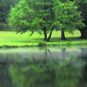 A Tree Reflected Art Print