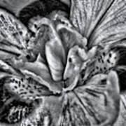 A Tribute To Georgia O'keeffe Art Print