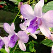 A Trio Of Pale Purple Orchids Art Print