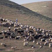 A View Of Sheep In The Judean Desert Art Print