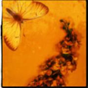 A Vintage Flower Butterfly Art Print