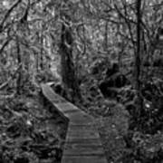 A Walk Through The Willowbrae Rainforest Black And White Art Print