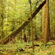 A Whisper In The Rainforest Art Print