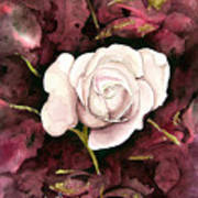 A White Rose Art Print