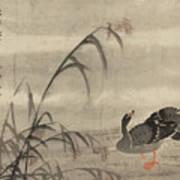A Wild Goose Art Print
