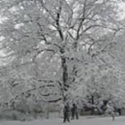 A Winter Touch Art Print