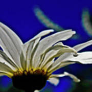 A Worms Eye View Of A Daisy Art Print