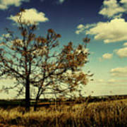A Yellow Tree In A Middle Of A Dry Field - Wide Angle Art Print