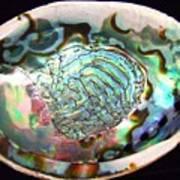 Abalone Seashell Art Print