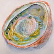 Abalone Study #2 Art Print