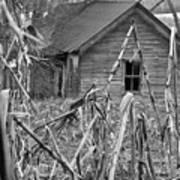Abandoned Farmhouse Through Cornfield Art Print