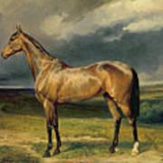 Abdul Medschid The Chestnut Arab Horse Art Print