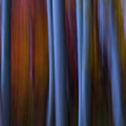 Abstract Aspens Art Print