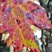 Abstract Autumn Leaf 2 Art Print