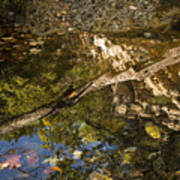 Abstract Autumn Reflection Art Print