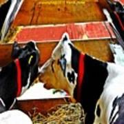 Abstract Cows Art Print