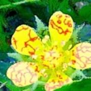 Abstract Of A Wild Buttercup Flower Art Print