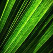Abstract Of Green Leaf Of Exotic Palm Tree Art Print