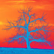 Abstract Single Tree Blue-orange Art Print