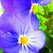 Abstract Violets Art Print