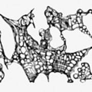 Abstraction 1226 - Marucii Art Print