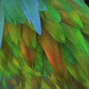 Abstractions From Nature - Pigeon Feathers Art Print